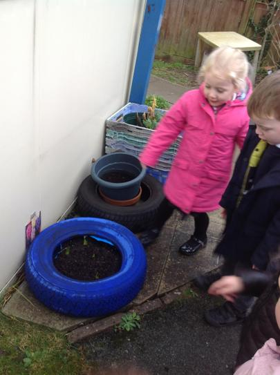 the bulbs we planted are growing