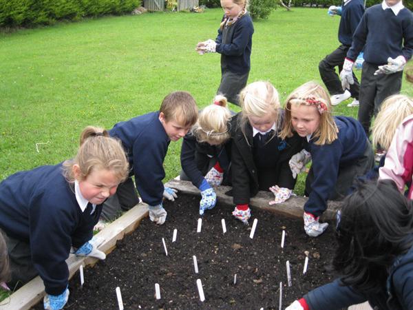 We planted three Iris bulbs each.