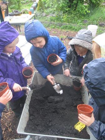 Plannu planhigion / Planting flowers