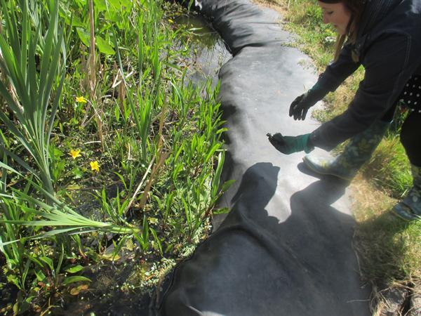 Daethon ni o hyd i froga / We found a frog!