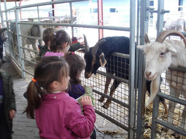 Ar y Fferm/On the Farm