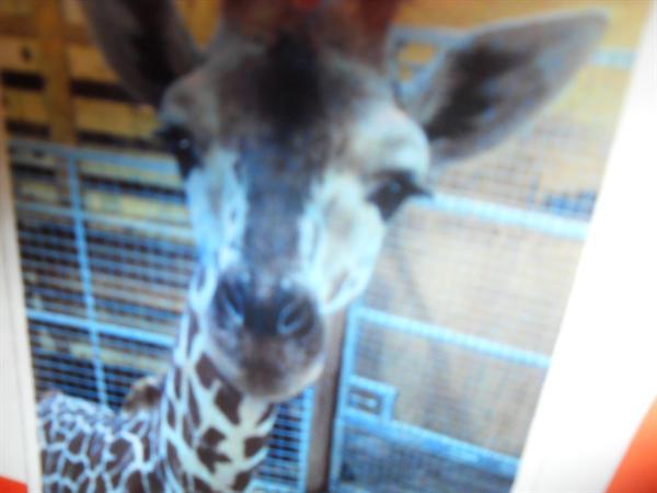 Zoo Arch Noa / Noa's Ark Zoo