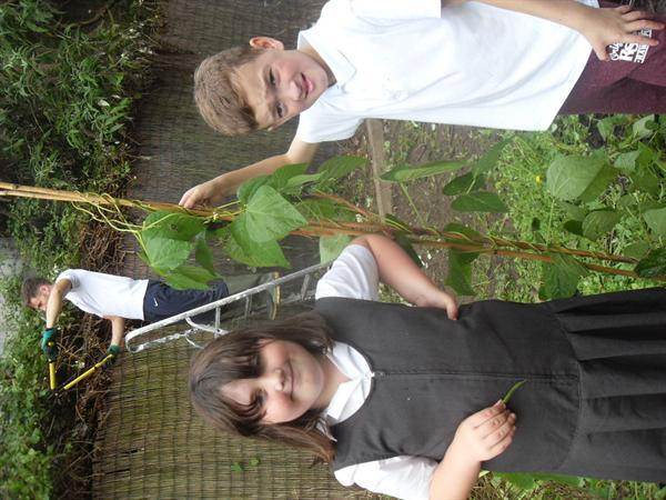 Gardd Wyllt a blasu/Gardening and tasting the veg