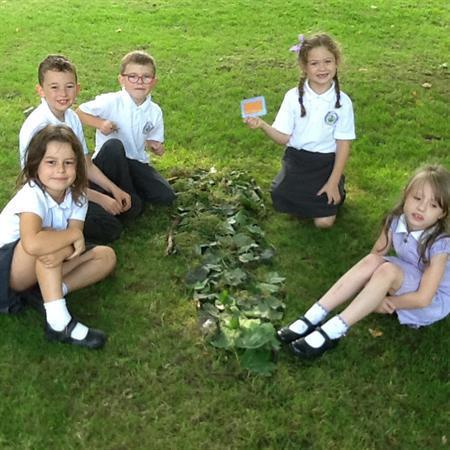 Forest School activities/ Ysgol y Goedwig