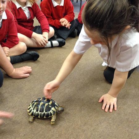 Visit from Charlie tortoise