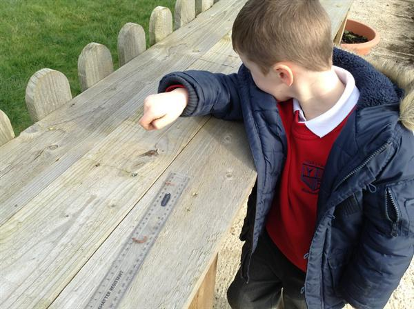 Measuring worms with a ruler ( & Miss Vicci)