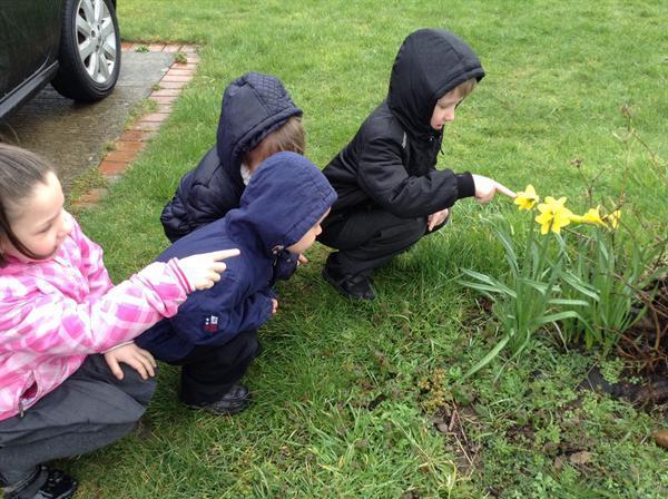 We found some daffodils!
