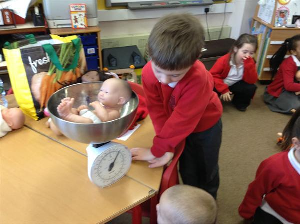 Weighing the babies.