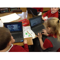 Researching meerkats in choosing time