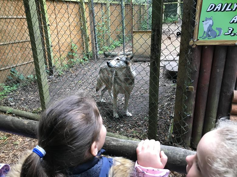 This is the wolf enclosure