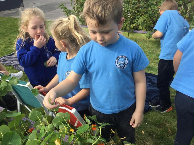 We enjoyed looking at the different plants and flowers