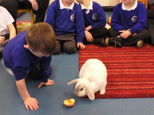 We had a lovely visit from Flopsy