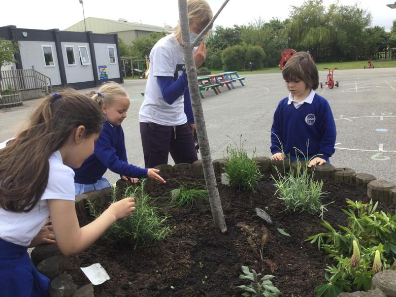 We were visited by Anna, who came to help us add some more plants in our outdoor area