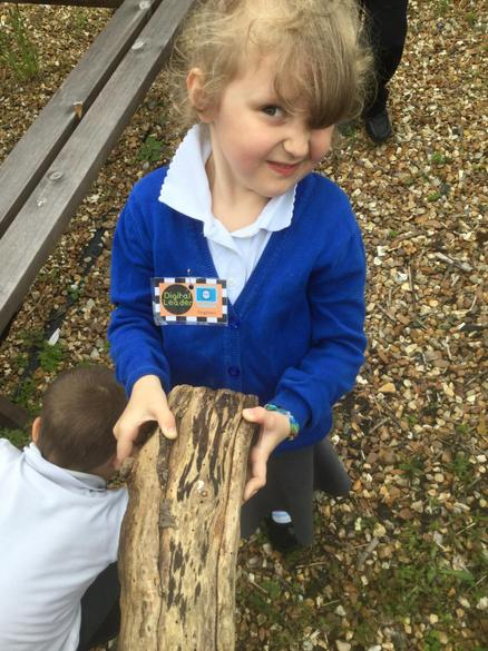 There were lots of woodlice on this log