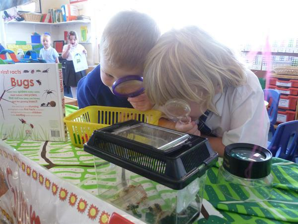 Investigating our class crickets