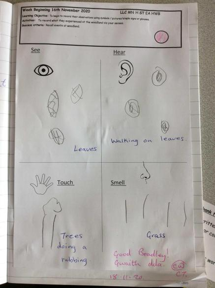 Using our senses on our woodland walk