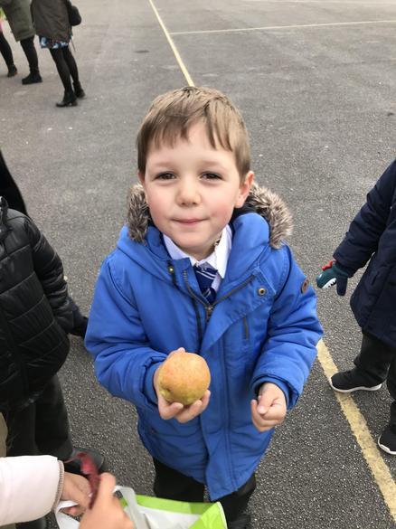 We found an apple tree