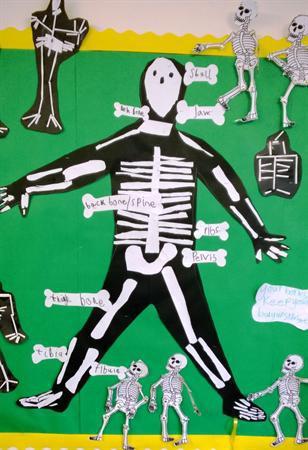 Nov 2013 - Learning About Bones