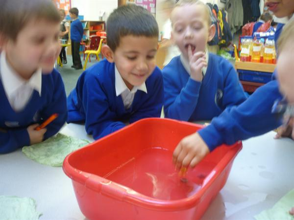 Science experiment - sinking and floating