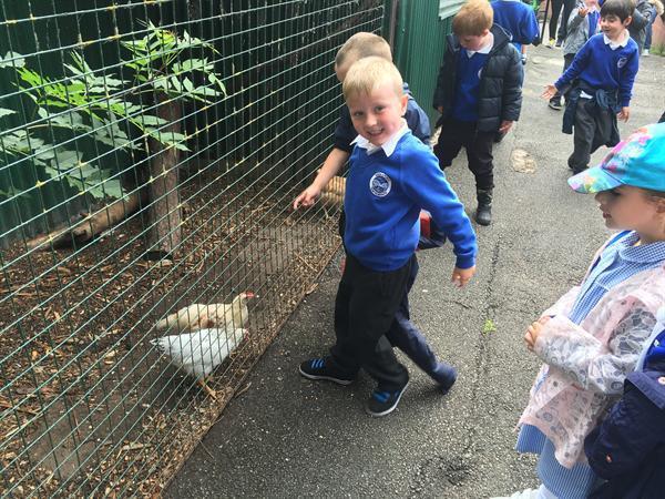Jun 2016 - Greenacres Animal Park