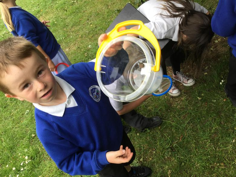 We put the insects we found in here