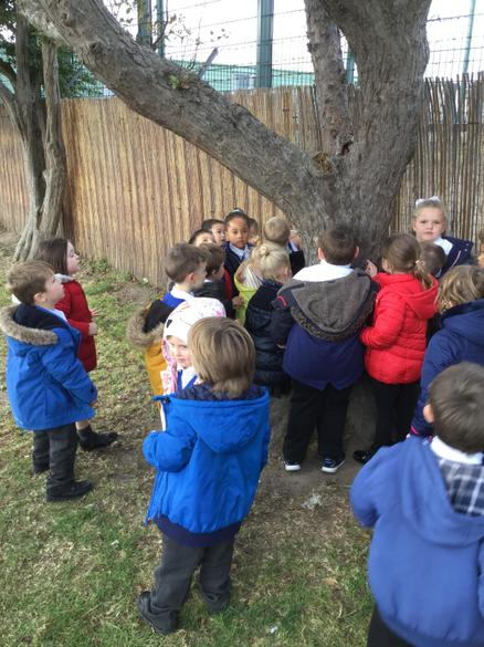 We looked carefully at the bark on the trees