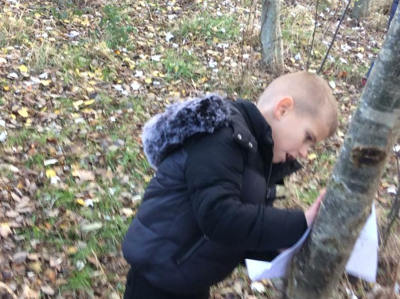 More tree rubbings