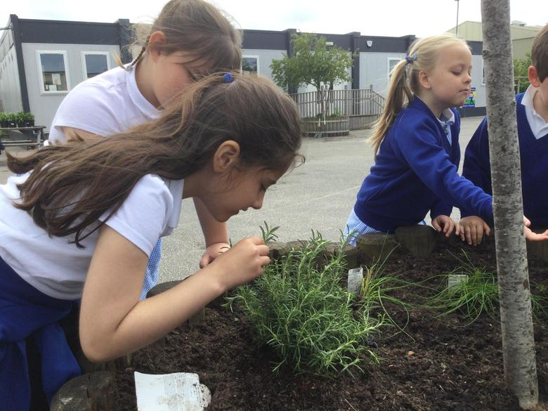 We used our sense of smell on the new plants