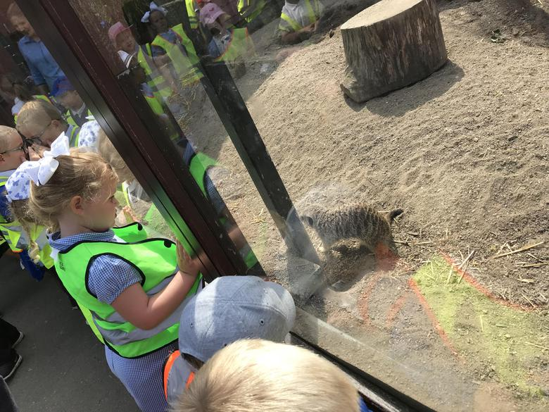 The meerkats were funny to watch