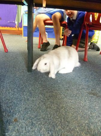 Flopsy having fun in class