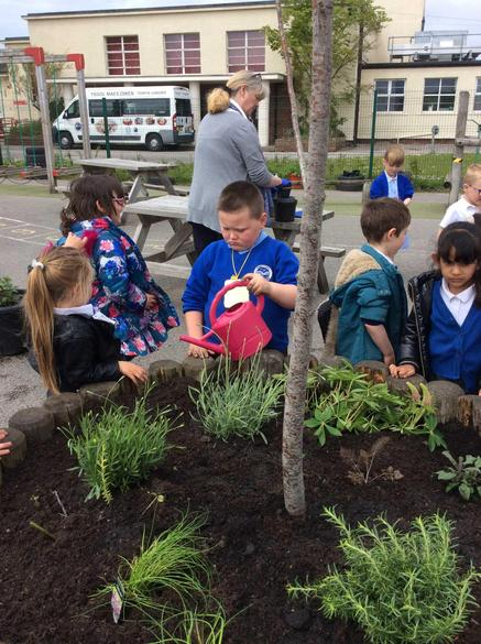 Developing our school planters