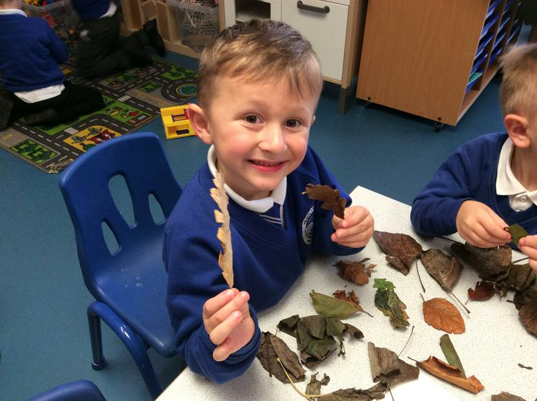 We found long and short leaves