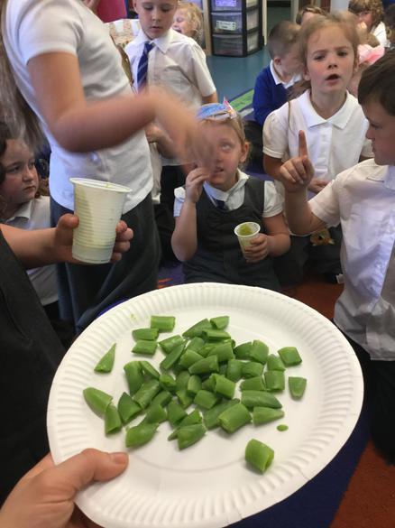 Elwy's pea tasting session