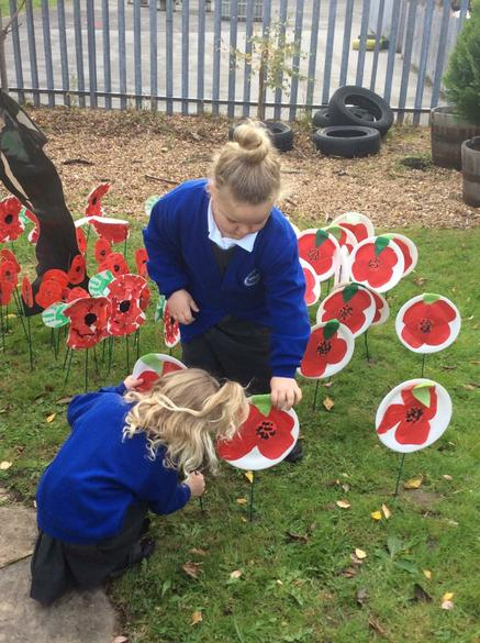 The poppies looked beautiful