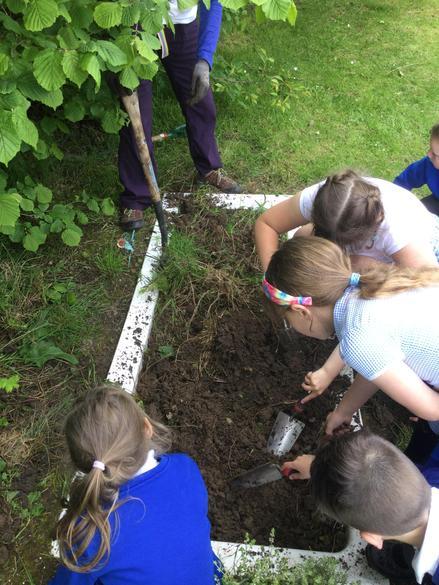 Our sunken bath will now be a herb garden