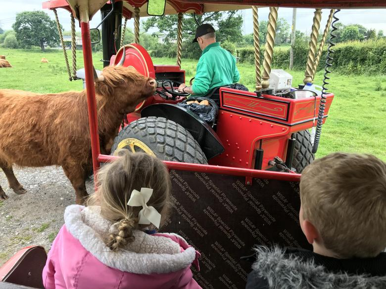The driver fed the animals along the way