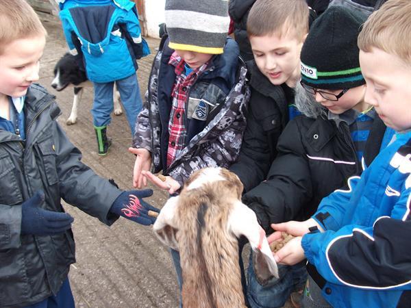 The boys feeding the goat.