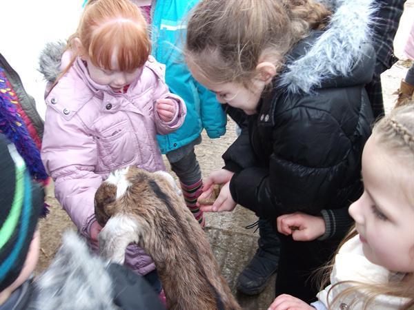 The girls feeding the goats.