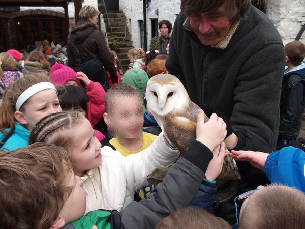 stroking the owl