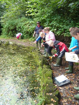 Pond-dipping.