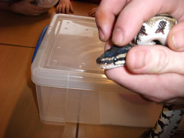 Year 4's Reptile Visit