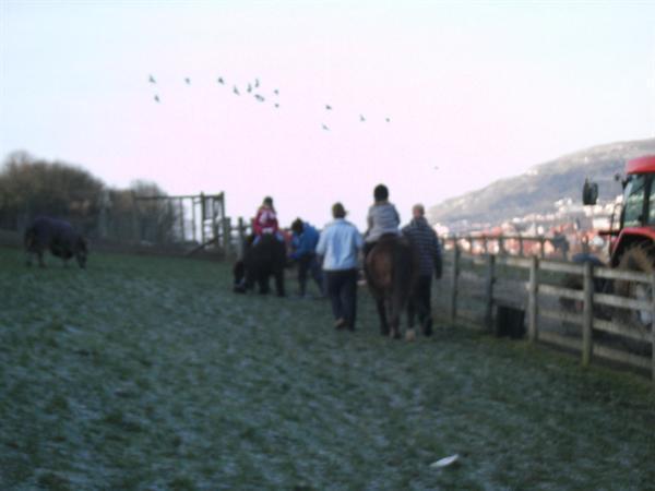 Bodafon Farm